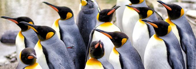 Reflektierende Gedanken zum Google Pinguin Update